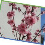 Baumpflanzung / Tree Planting